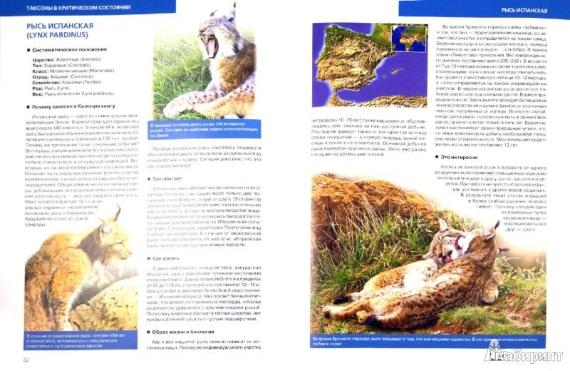 Иллюстрация 1 из 19 для Красная книга Земли - Скалдина, Слиж | Лабиринт - книги. Источник: Лабиринт