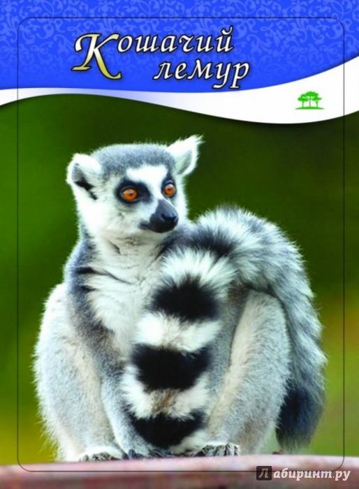 Иллюстрация 1 из 5 для Животные и птицы. 3-12 лет. 100 карточек - Н. Шишова | Лабиринт - книги. Источник: Лабиринт