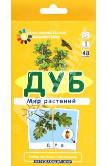 Дуб. Мир растений