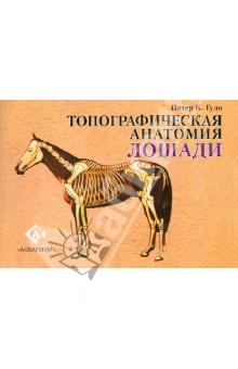 Топографическая анатомия лошадиВетеринария<br>Топографическая анатомия лошади содержит свыше 250 отдельных схем и рисунков, каждый рисунок пронумерован и снабжен пояснительными надписями; дополнительная информация, помогающая их интерпретации, приведена в тексте.<br>Основной облик лошади рассматривается с помощью точек, показанных с нескольких различных ракурсов. В деталях обсуждаются кости, мышцы, сухожилия и связки, обеспечивающие анатомическую основу этим поверхностным точкам, при этом акцент везде сделан на те структуры, которые можно увидеть или прощупать с поверхности тела.<br>На ряде рисунков показаны компоненты пищеварительной, дыхательной, мочевой и половой систем, а также нервы и кровеносные сосуды. Особо рассматривается строение головы с акцентом на носовую полость, зубы, гортань и воздухоносные мешки. Также детально проиллюстрировано строение конечностей, особенно копыта, и имеется ссылка на повреждения и болезни, результатом которых может быть неправильное строение.<br>Обилие информации, содержащейся в этой книге, будет представлять большой интерес и ценность для изучающих ветеринарию и иппологию, владельцев, наездников и селекционеров, фактически для любого, желающего узнать больше о строении лошади, и о том, что делает ее одним из самых прекрасных животных.<br>Д-р Питер Гуди много лет читал лекции по ветеринарной анатомии в Лондонском Королевском ветеринарном колледже. Он также является автором книги Топографическая анатомия собаки.<br>