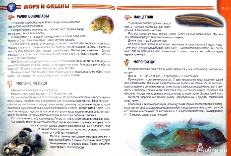 Иллюстрация 1 из 14 для Жители морей и океанов - Татьяна Жабская | Лабиринт - книги. Источник: Лабиринт