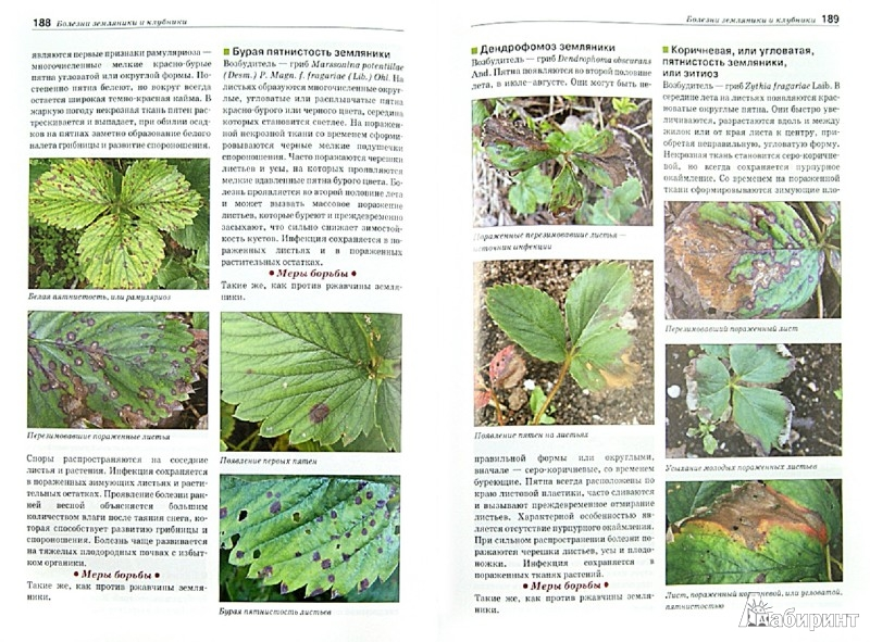 Иллюстрация 1 из 33 для Болезни и вредители плодовых растений. Атлас-определитель - Трейвас, Каштанова   Лабиринт - книги. Источник: Лабиринт