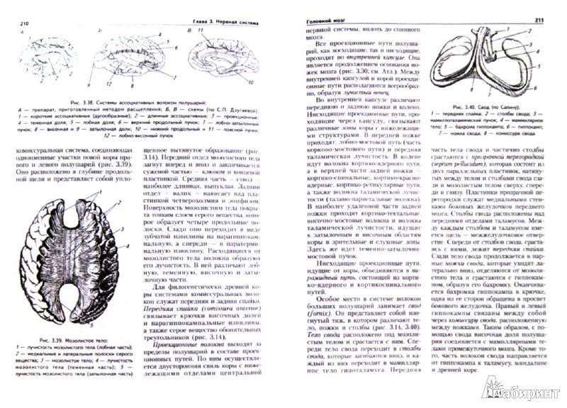Иллюстрация 1 из 11 для Анатомия человека. Учебник для студентов вузов (+CD) - Курепина, Ожигова, Никитина | Лабиринт - книги. Источник: Лабиринт
