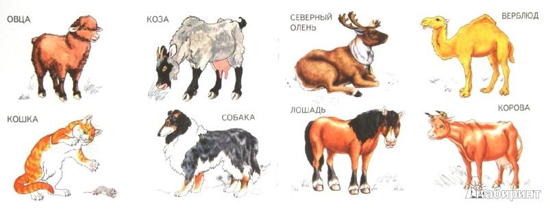 Иллюстрация 1 из 15 для Домашние животные | Лабиринт - книги. Источник: Лабиринт