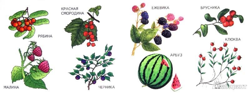 Иллюстрация 1 из 4 для Ягоды | Лабиринт - книги. Источник: Лабиринт