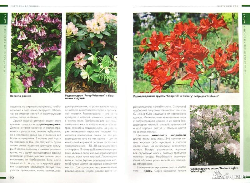 Иллюстрация 1 из 18 для Ваш цветущий сад. С ранней весны до поздней осени - Светлана Воронина | Лабиринт - книги. Источник: Лабиринт