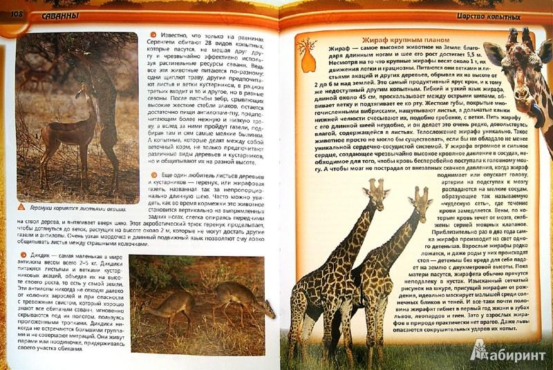 Иллюстрация 1 из 16 для Природа - Ирина Травина   Лабиринт - книги. Источник: Лабиринт