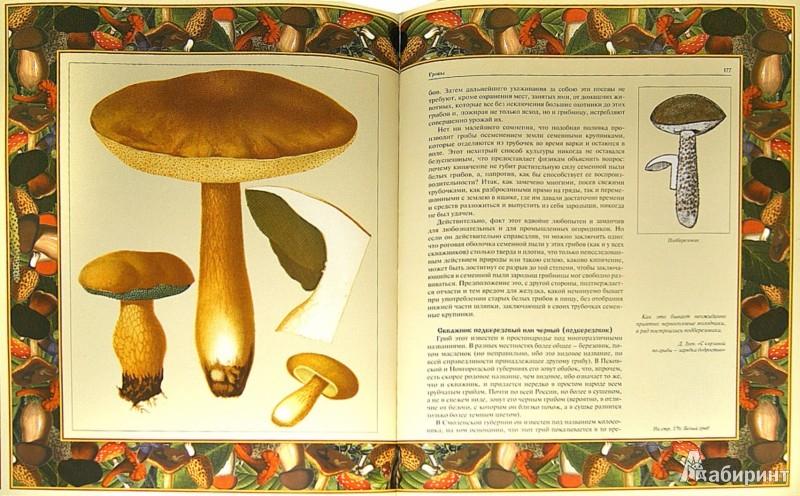 Иллюстрация 1 из 9 для Русский лес. Грибы и ягоды | Лабиринт - книги. Источник: Лабиринт