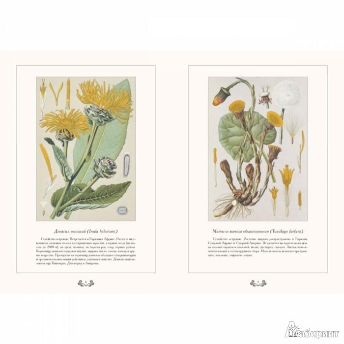 Иллюстрация 1 из 16 для В. К. Варлих. Атлас русских лекарственных растений - Вольдемар Варлих | Лабиринт - книги. Источник: Лабиринт