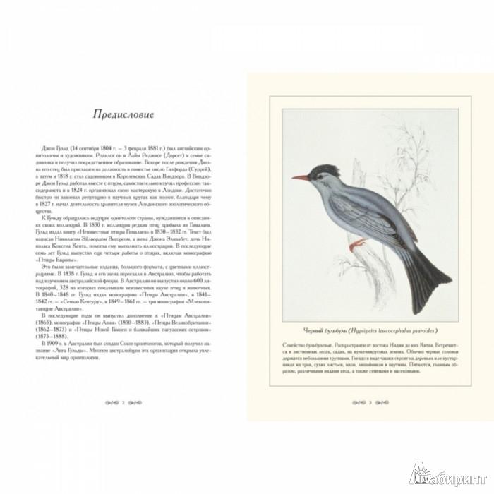 Иллюстрация 1 из 10 для Птицы Гималаев. Иллюстрации Дж. Гульда - Джон Гульд | Лабиринт - книги. Источник: Лабиринт