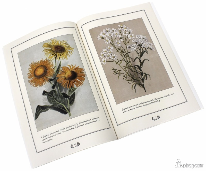Иллюстрация 1 из 5 для Садовые многолетники. Акварели В. Мюллера - Е. Малинина | Лабиринт - книги. Источник: Лабиринт