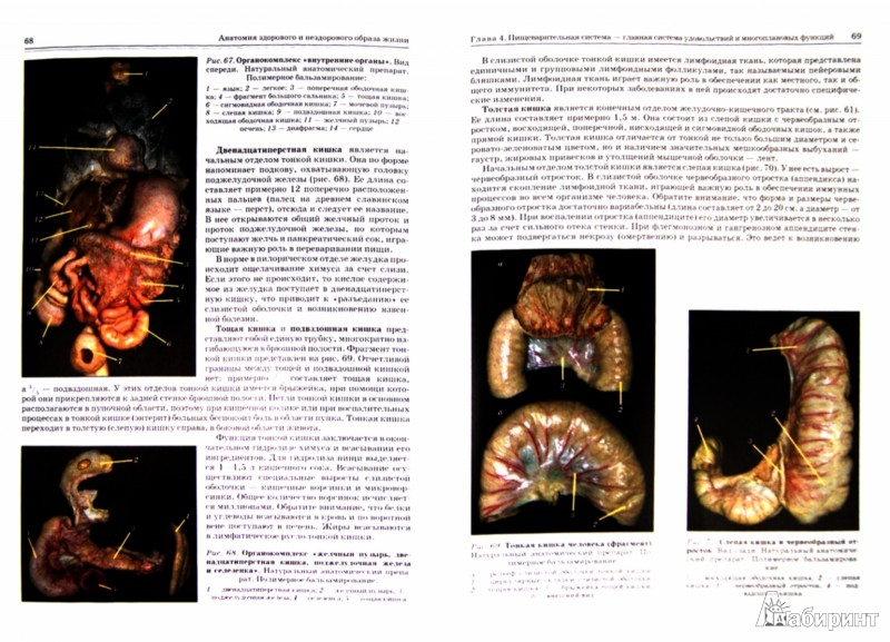 Иллюстрация 1 из 17 для Анатомия здорового и нездорового образа жизни - Гайворонский, Ничипорук, Яблонский | Лабиринт - книги. Источник: Лабиринт