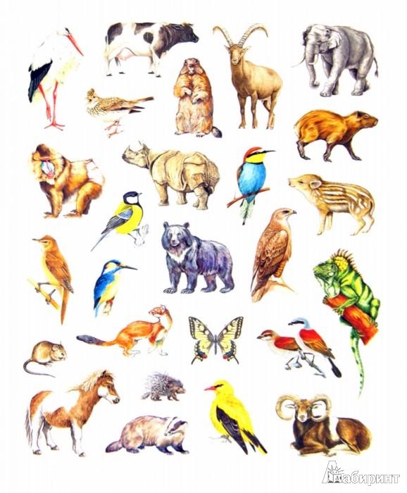 Иллюстрация 1 из 11 для Большая книга развивающих наклеек. Животные | Лабиринт - книги. Источник: Лабиринт