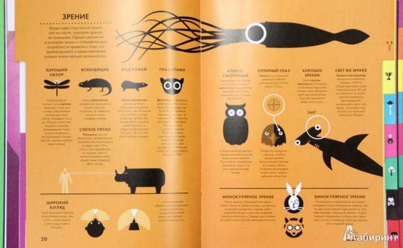 Иллюстрация 1 из 42 для Царство животных - Блекмен, Роджерс   Лабиринт - книги. Источник: Лабиринт