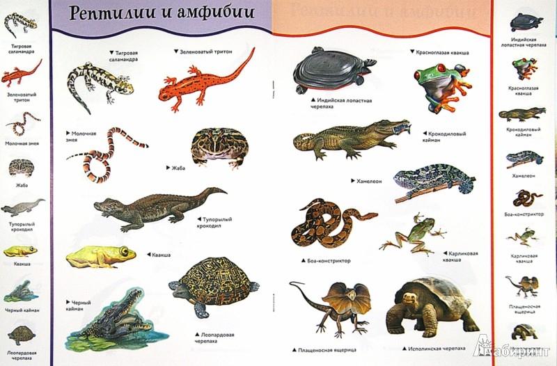 Иллюстрация 1 из 7 для Рептилии и амфибии | Лабиринт - книги. Источник: Лабиринт