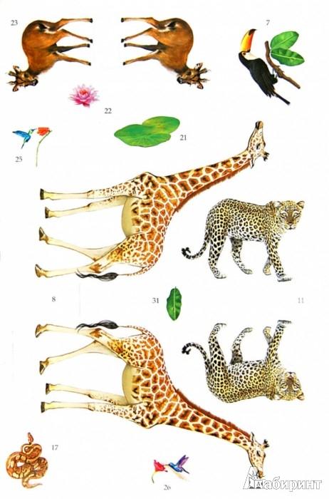 Иллюстрация 1 из 5 для Удивительный мир животных   Лабиринт - игрушки. Источник: Лабиринт