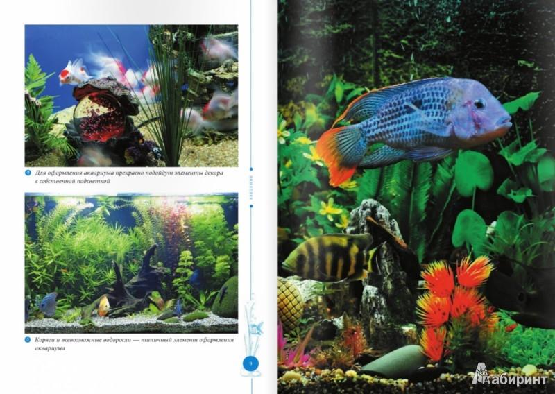 Иллюстрация 1 из 8 для Аквариумные рыбки - Анжелика Ярошевич | Лабиринт - книги. Источник: Лабиринт