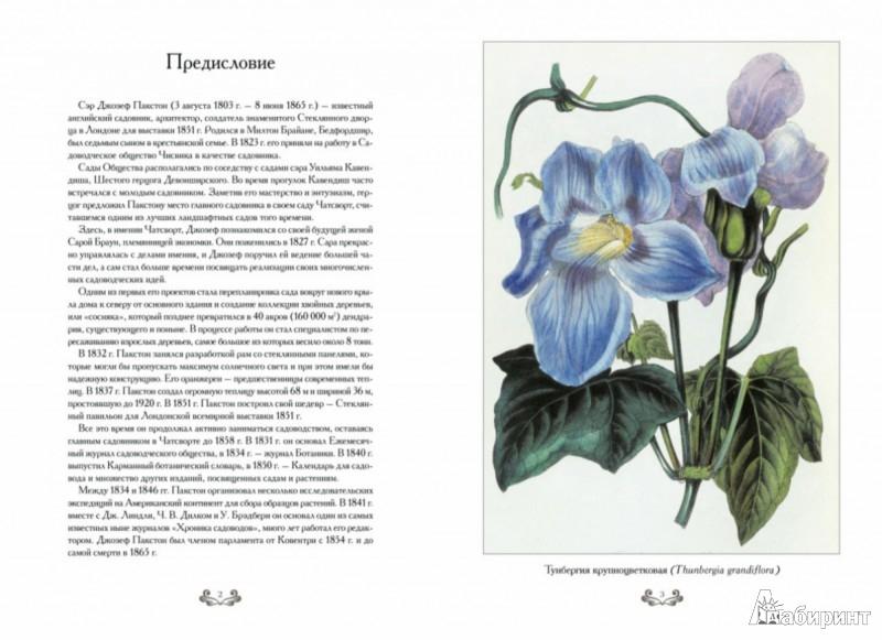 Иллюстрация 1 из 5 для Самые красивые цветы. Дж. Пакстон - С. Иванов   Лабиринт - книги. Источник: Лабиринт