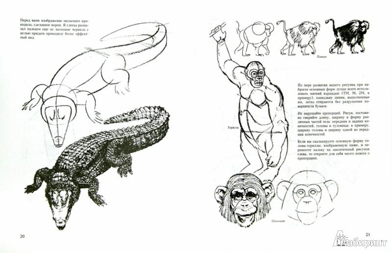 Иллюстрация 1 из 9 для Учитесь рисовать диких животных - Дэвид Браун | Лабиринт - книги. Источник: Лабиринт