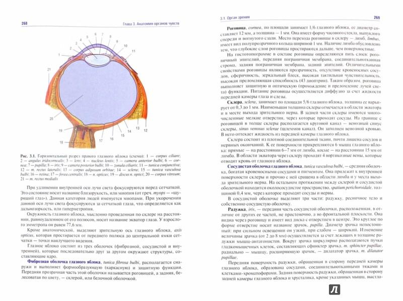 Иллюстрация 1 из 7 для Анатомия человека. Учебник в 2 томах. Том 2. Нервная система. Сосудистая система - Гайворонский, Гайворонский, Ничипорук | Лабиринт - книги. Источник: Лабиринт