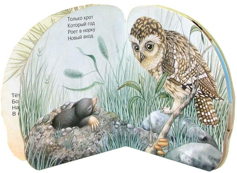 Иллюстрация 1 из 18 для Про сову. Зверята - В. Комаров | Лабиринт - книги. Источник: Лабиринт