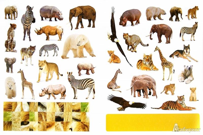 Иллюстрация 1 из 44 для Дикие животные. Наклеивай и учись | Лабиринт - книги. Источник: Лабиринт