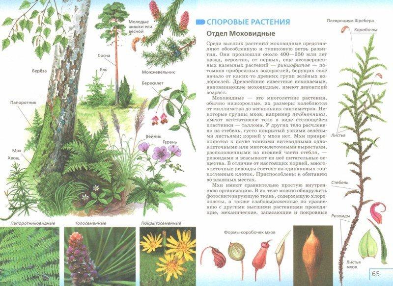 Иллюстрация 1 из 5 для Биология. Многообразие живых организмов. Бактерии, грибы, растения. 7 класс. Учебник. ФГОС - Сонин, Захаров | Лабиринт - книги. Источник: Лабиринт