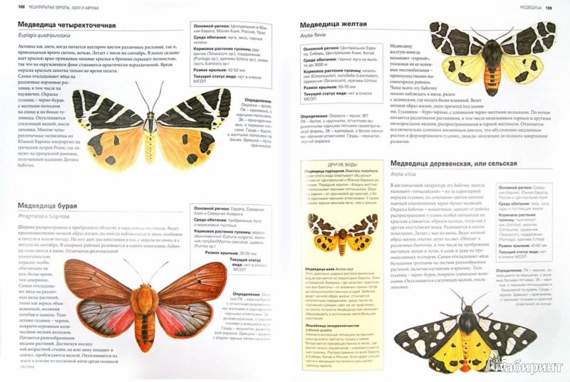Иллюстрация 1 из 39 для Бабочки. Всемирная иллюстрированная энциклопедия - Салли Морган | Лабиринт - книги. Источник: Лабиринт