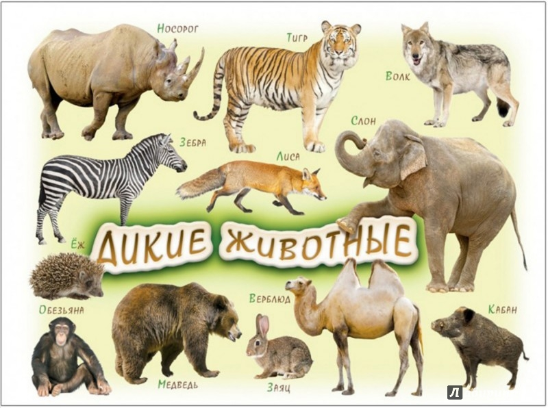 Иллюстрация 1 из 2 для Магнит на холодильник. Дикие животные. Для детей 1-4 лет   Лабиринт - книги. Источник: Лабиринт
