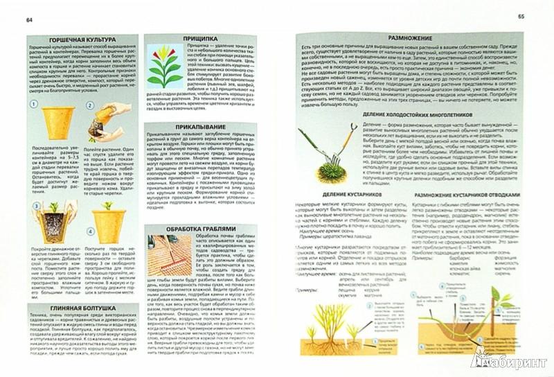 Иллюстрация 1 из 15 для Библия садовода и огородника - Дэвид Хессайон   Лабиринт - книги. Источник: Лабиринт