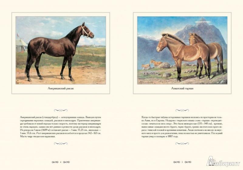 Иллюстрация 1 из 6 для Лошади - И. Афанасьева   Лабиринт - книги. Источник: Лабиринт