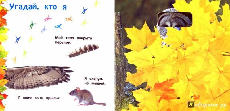 Иллюстрация 1 из 12 для Дикие животные - Анна Прищеп | Лабиринт - книги. Источник: Лабиринт