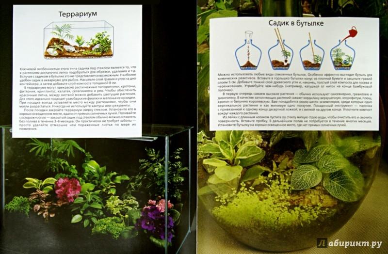 Иллюстрация 1 из 11 для Библия комнатных растений - Дэвид Хессайон | Лабиринт - книги. Источник: Лабиринт