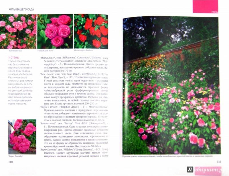 Иллюстрация 1 из 14 для Хиты вашего сада. Розы, хвойные, лианы, газоны, красивоцветущие кустарники - Александрова, Князева, Князева, Писарев   Лабиринт - книги. Источник: Лабиринт
