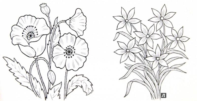 Иллюстрация 1 из 42 для Цветочная страна | Лабиринт - книги. Источник: Лабиринт