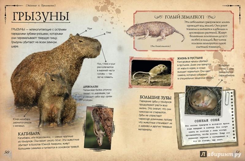 Иллюстрация 1 из 15 для Коллекция костей. Атлас животных - Роб Колсон | Лабиринт - книги. Источник: Лабиринт