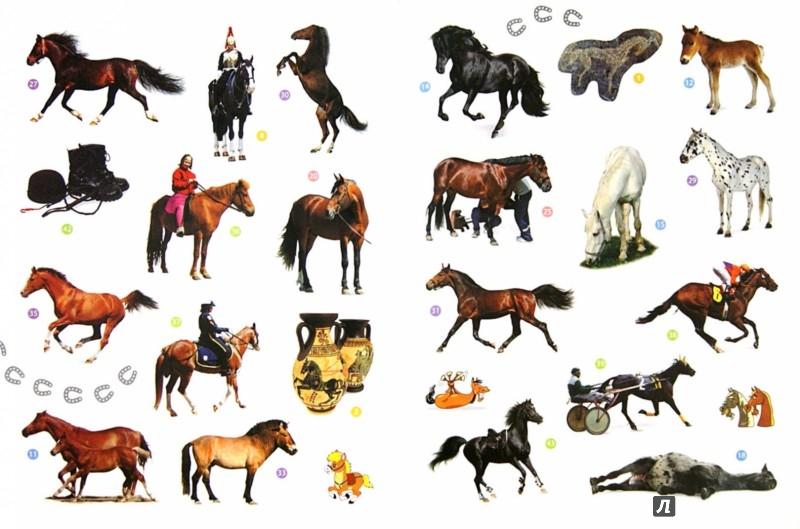 Иллюстрация 1 из 6 для Мои друзья - лошади. Энциклопедия животных с наклейками | Лабиринт - книги. Источник: Лабиринт