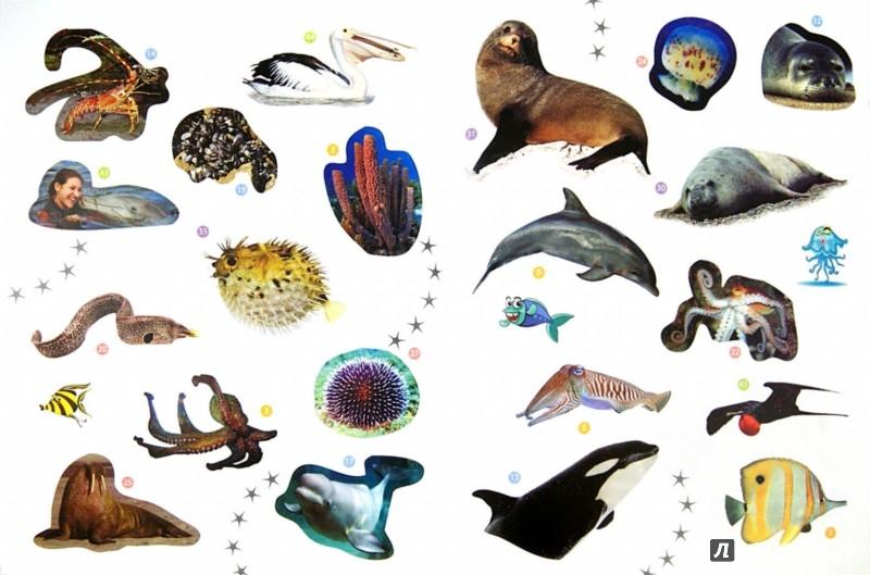 Иллюстрация 1 из 7 для Морские животные. Энциклопедия животных с наклейками   Лабиринт - книги. Источник: Лабиринт
