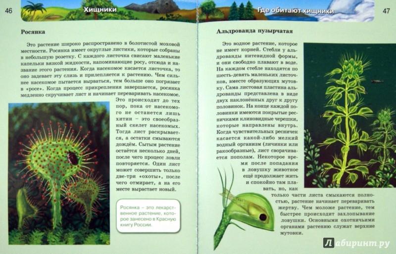 Иллюстрация 1 из 21 для Хищники | Лабиринт - книги. Источник: Лабиринт