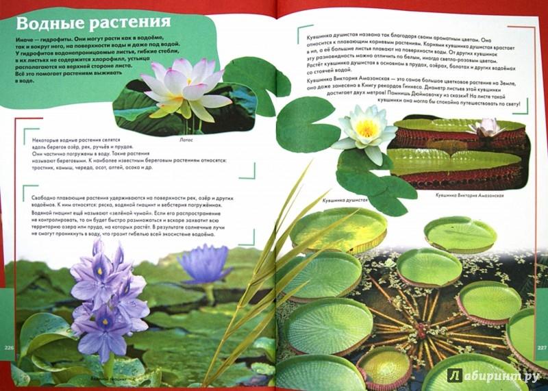 Иллюстрация 1 из 2 для Суперэнциклопедия для мальчиков и девочек - Татьяна Беленькая   Лабиринт - книги. Источник: Лабиринт