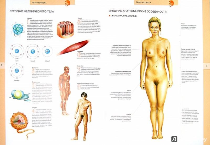 Иллюстрация 1 из 4 для Большой иллюстрированный атлас анатомии человека | Лабиринт - книги. Источник: Лабиринт