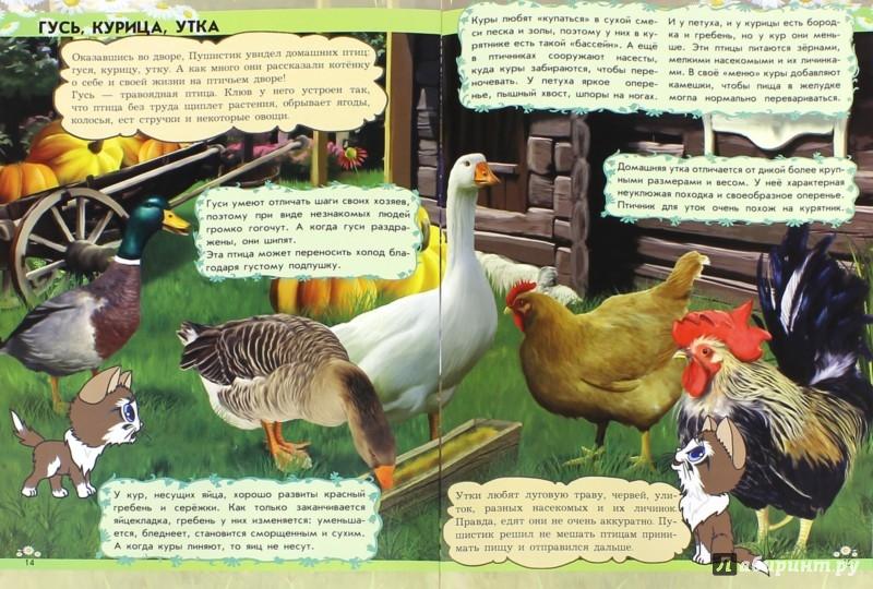 Иллюстрация 1 из 9 для Откуда в блюдце молоко? Домашние животные - Анна Макулина | Лабиринт - книги. Источник: Лабиринт