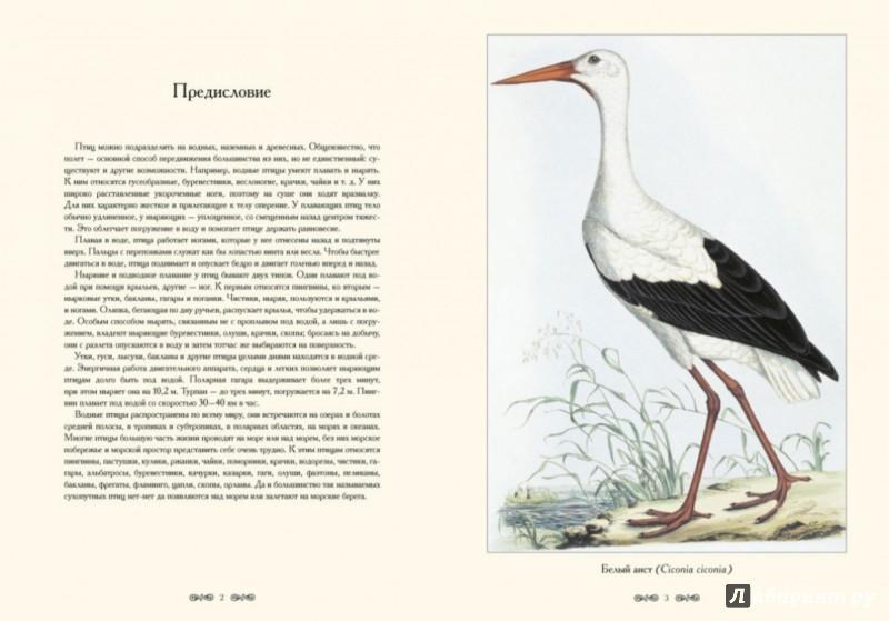 Иллюстрация 1 из 5 для Водные птицы | Лабиринт - книги. Источник: Лабиринт