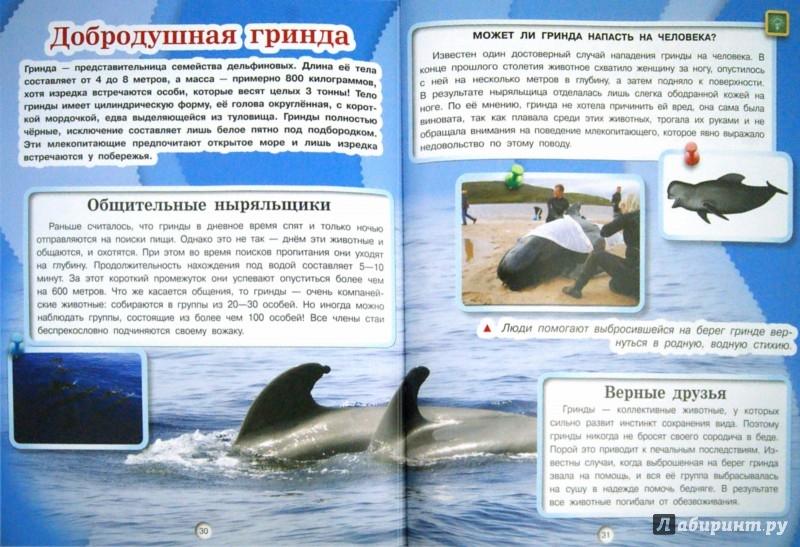 Иллюстрация 1 из 33 для Киты, дельфины и акулы - Дмитрий Кошевар | Лабиринт - книги. Источник: Лабиринт