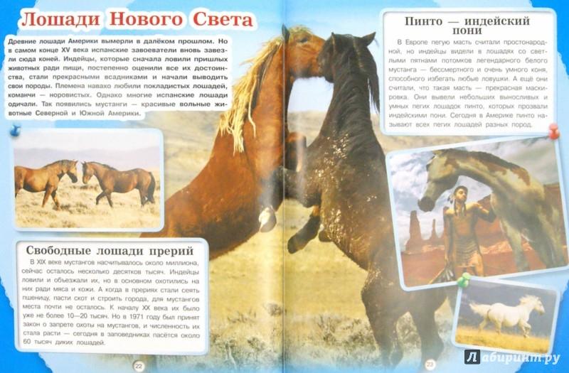 Иллюстрация 1 из 11 для Лошади и пони - Анна Спектор   Лабиринт - книги. Источник: Лабиринт