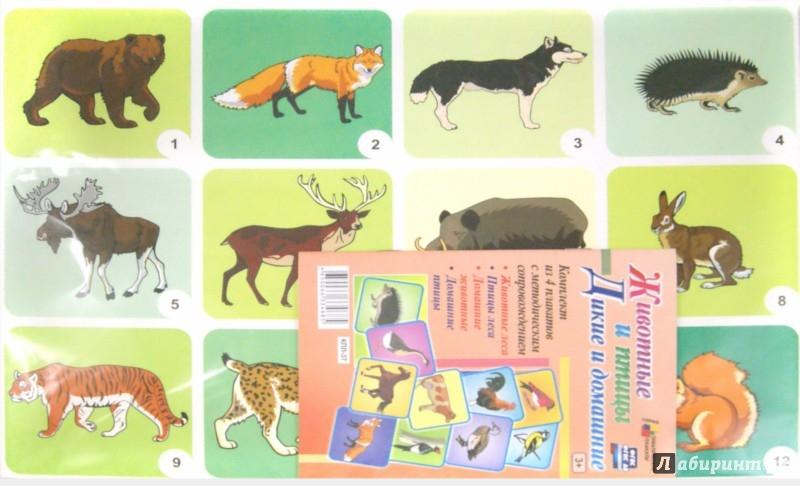 Иллюстрация 1 из 15 для Комплект плакатов. 4 плаката с методическим сопровождением. Животные и птицы. Дикие и домашние. ФГОС | Лабиринт - книги. Источник: Лабиринт