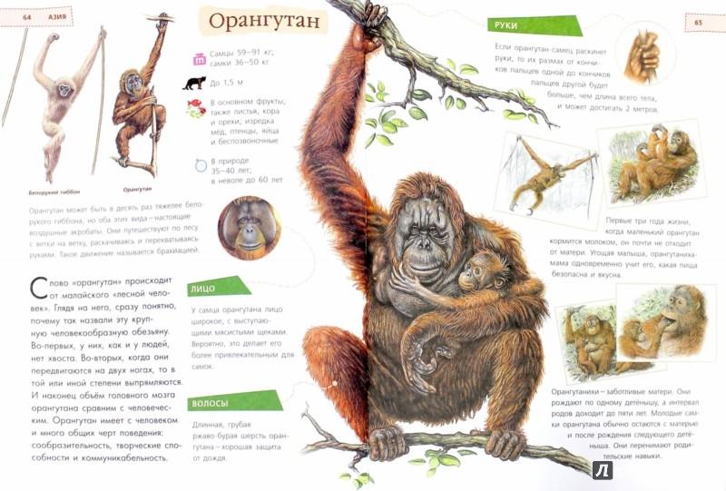 Иллюстрация 1 из 11 для Животные. Удивительная книга для детей от 2 лет - Paula Hammond | Лабиринт - книги. Источник: Лабиринт