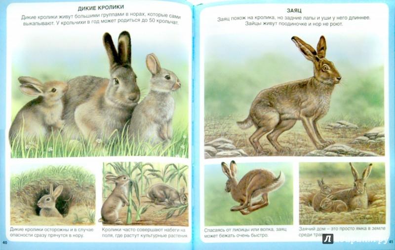 Иллюстрация 1 из 56 для Животные - Эмили Бомон | Лабиринт - книги. Источник: Лабиринт