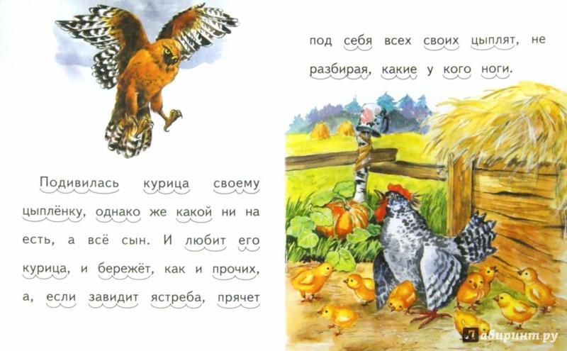 Иллюстрация 1 из 13 для Чужое яичко - Константин Ушинский | Лабиринт - книги. Источник: Лабиринт