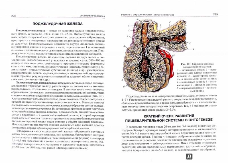Иллюстрация 1 из 10 для Анатомия человека. Учебник для медицинских училищ и колледжей - Сапин, Билич   Лабиринт - книги. Источник: Лабиринт